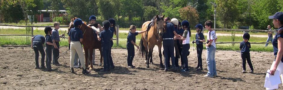 Gioco-2---Sellare-pony-(5)